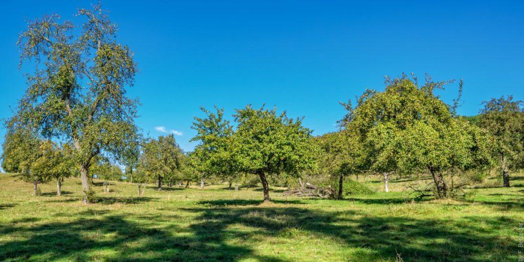 hoogstamfruitbomen_vijlen_limburg_nederland_nl_nature_natuur_landscape-309072